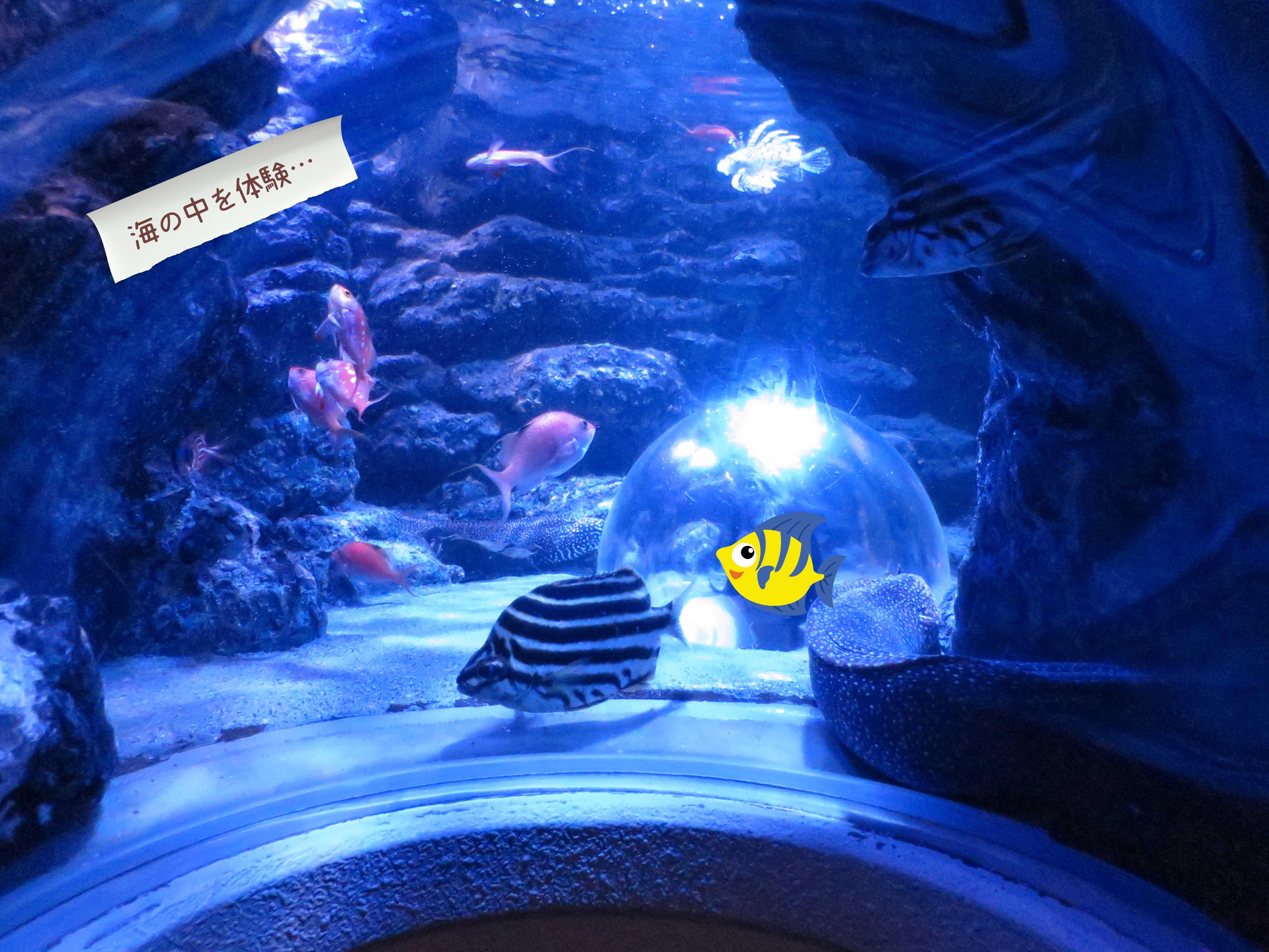 海底気分で水中を観察