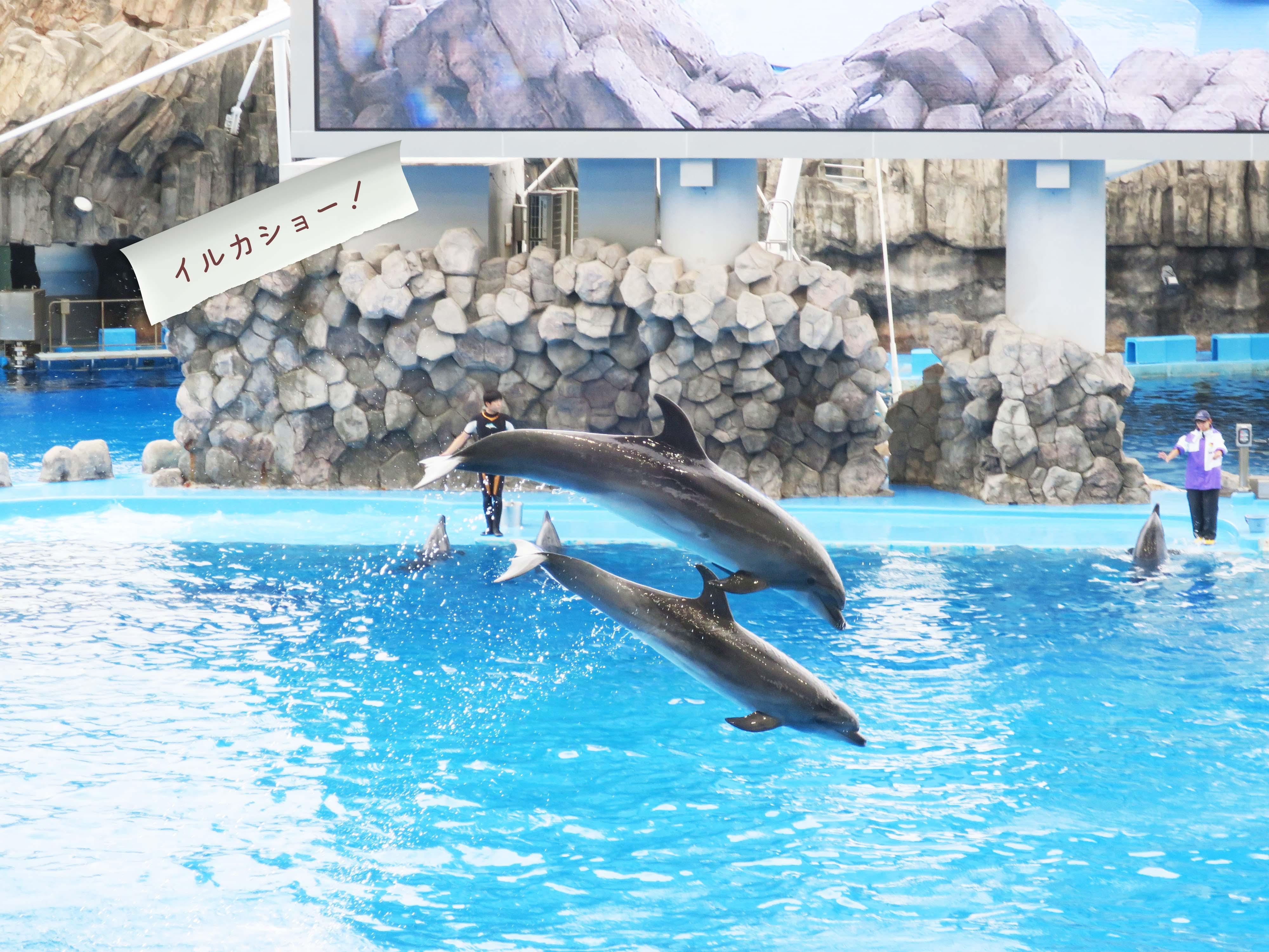 イルカショー:2頭のイルカのジャンプ