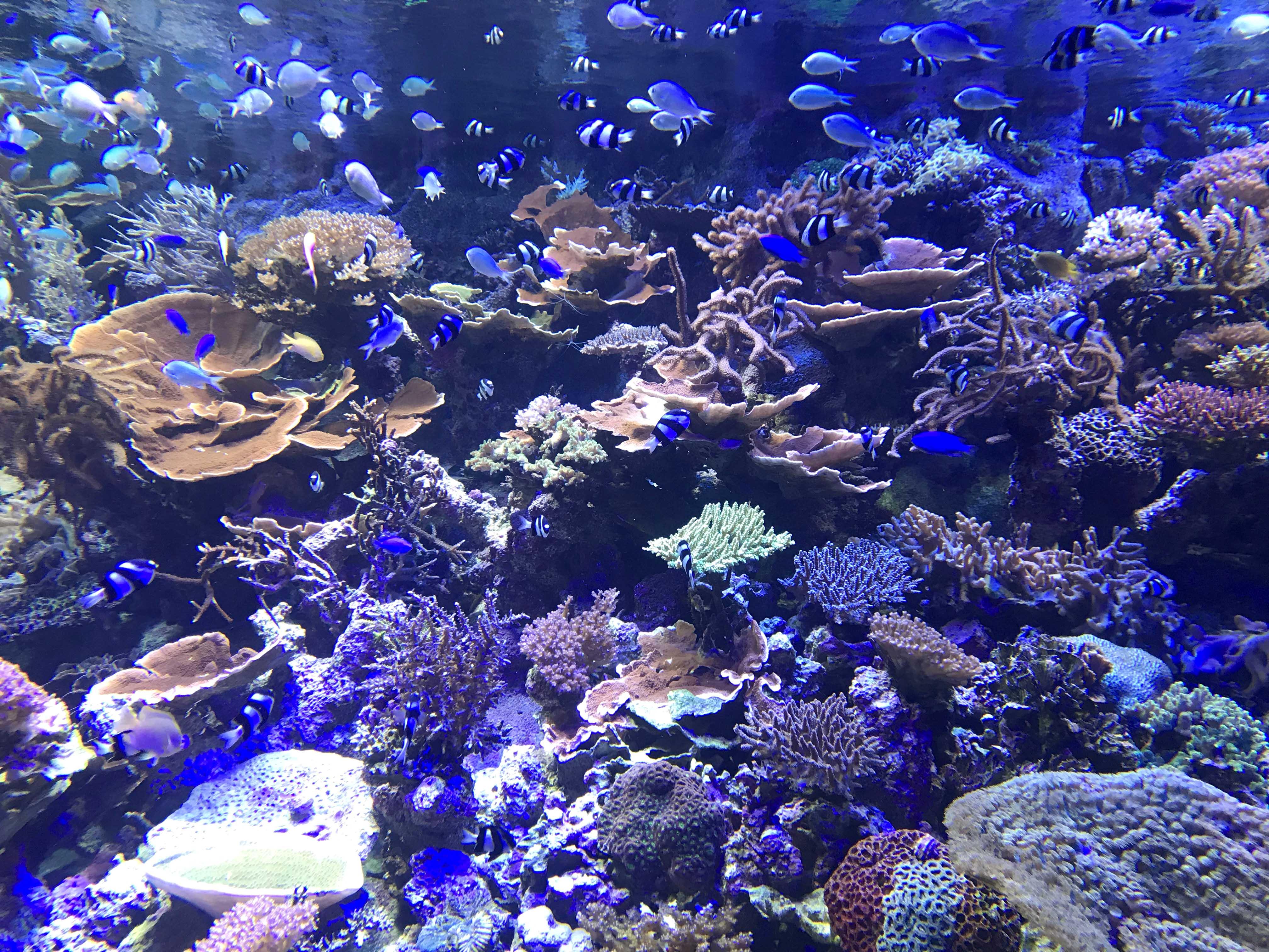熱帯魚と本物のサンゴ礁