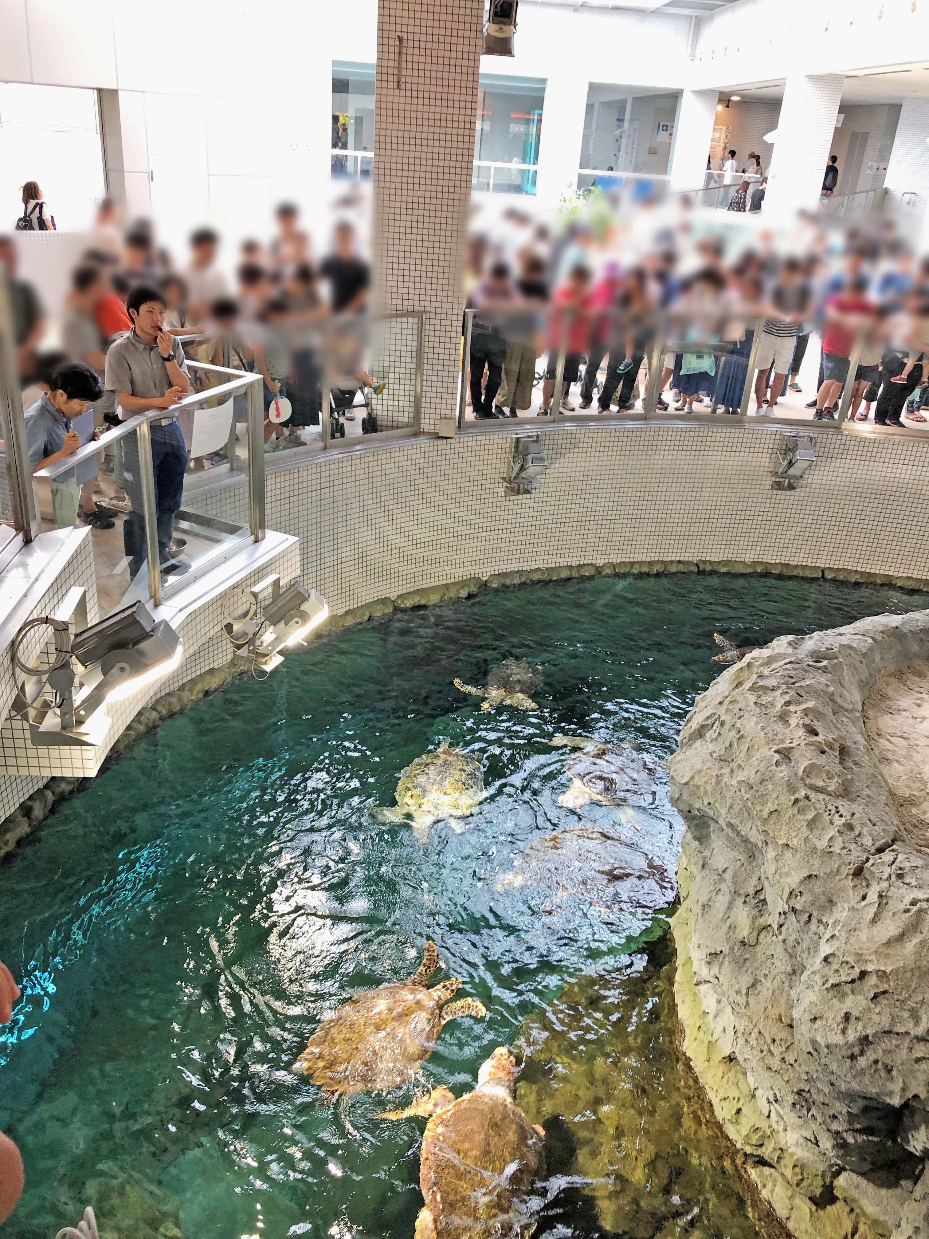 餌に群がる亀と、それを観察する客たち