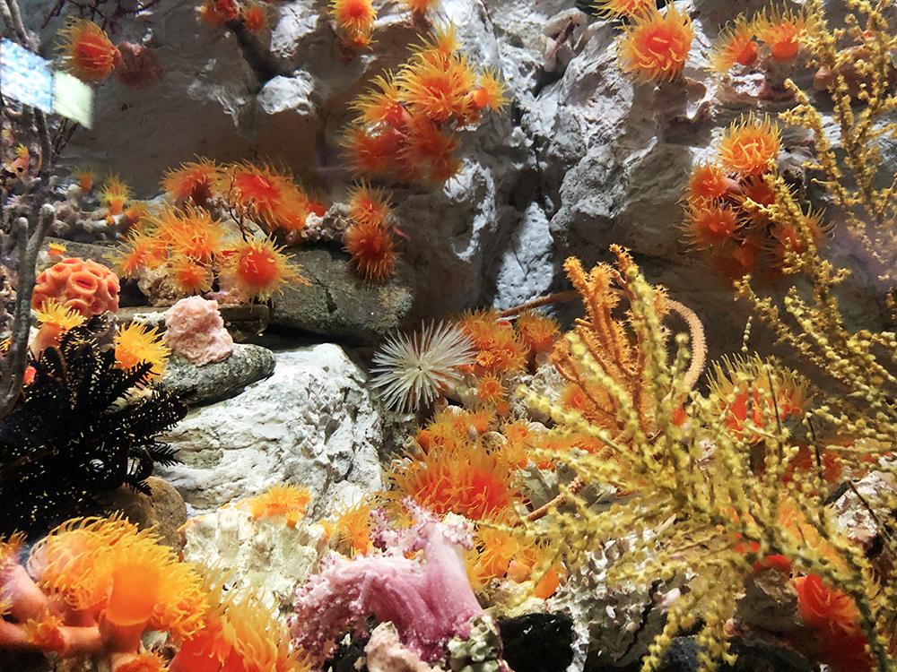 スナップショット2:岩礁