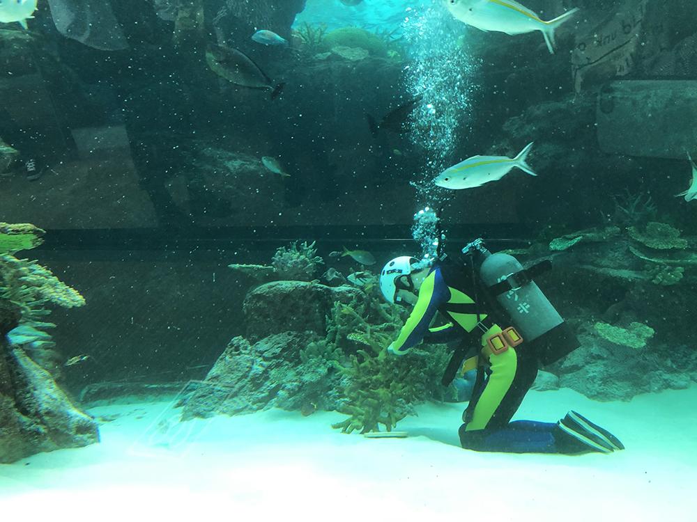 スナップショット6:水中で手入れをする職員