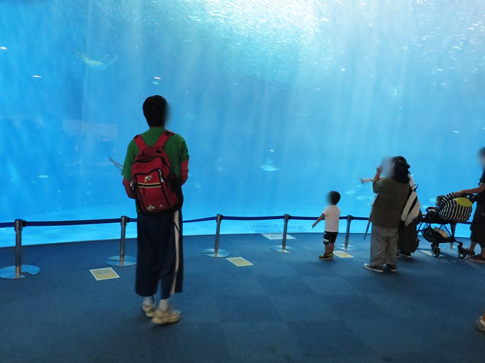水中の魚を眺める観光客たち