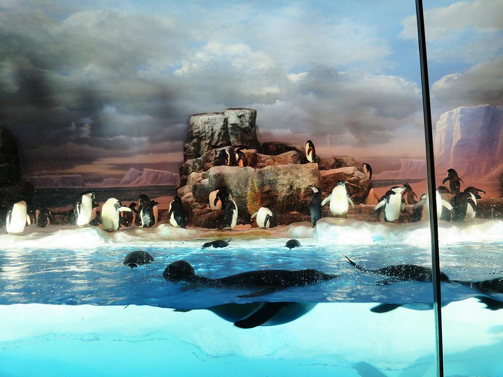 ペンギンが沢山