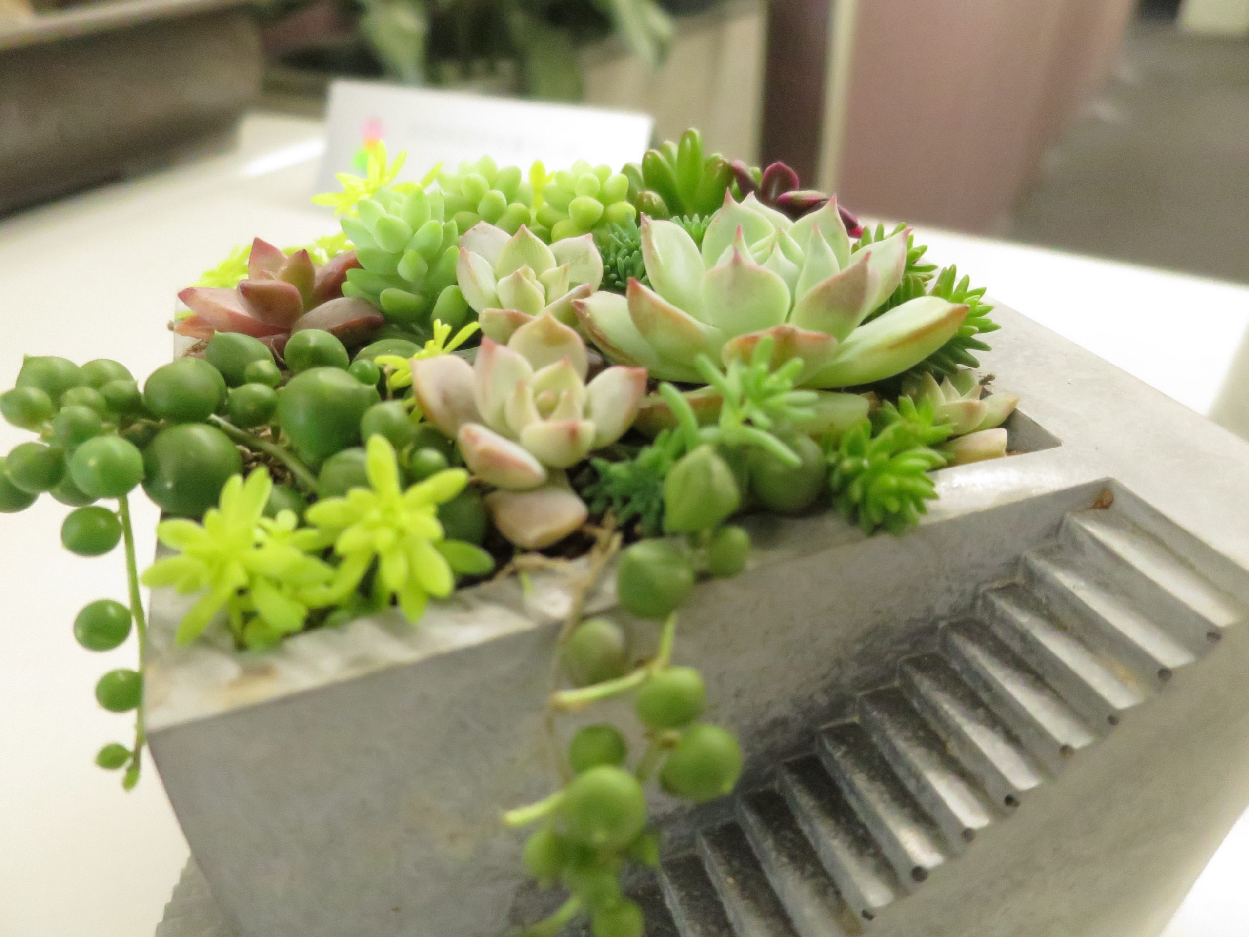 多肉植物の寄せ植え鉢、階段つき