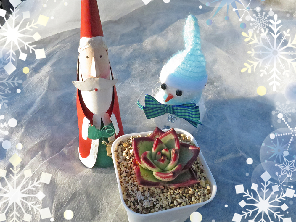 サンタや雪だるまの人形と多肉植物