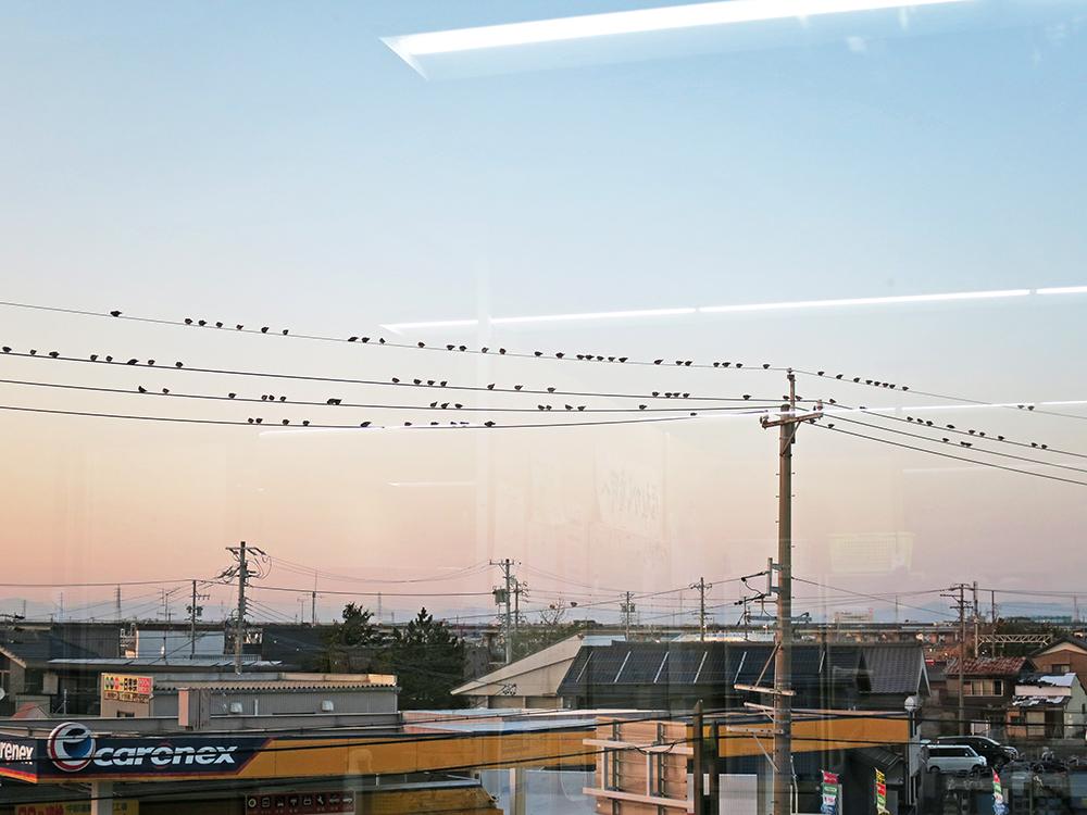 電線に群がる小鳥