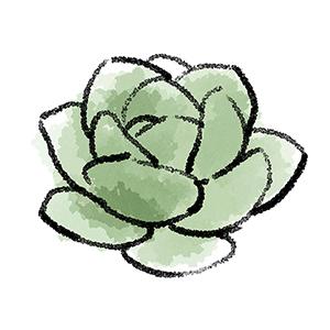 多肉植物の線画に緑系の色塗り