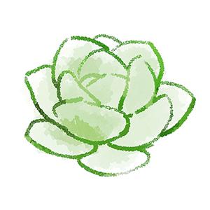 多肉植物の絵、塗りつぶしは明るく、線に緑がかかる