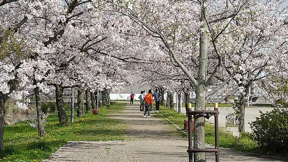 桜を眺めながらゆっくり歩いている